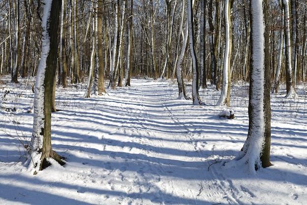 Piękny zimowy dzień w parku lub lesie