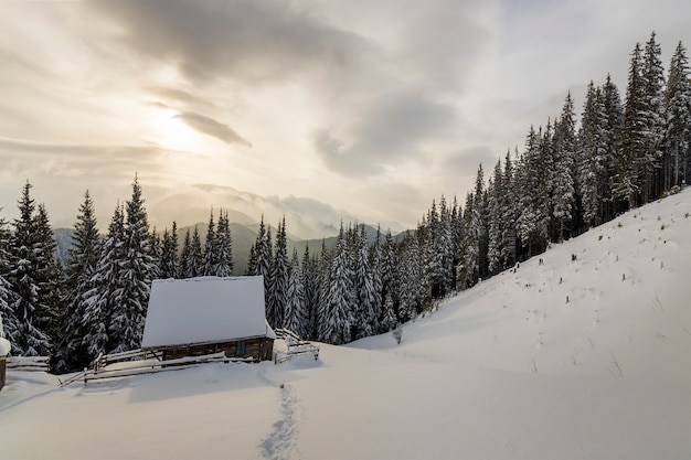 Piękny zimowy krajobraz. drewniana pasterska buda na halnej śnieżnej polanie wśród sosen na chmurnego nieba kopii przestrzeni.
