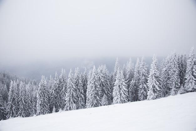 Piękny zimowy krajobraz górski. zimowy krajobraz ze świeżym śniegiem w górskim lesie