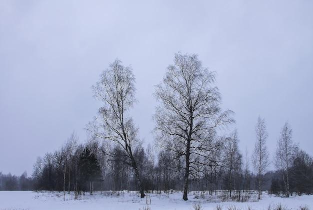 Piękny zimowy krajobraz z drzewami w śniegu na wsi