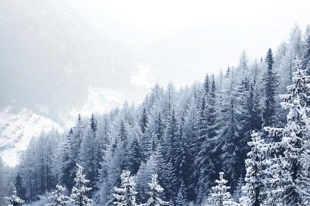 Piękny zimowy krajobraz z pokrytym śniegiem górskim lasem