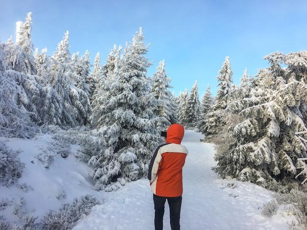 Piękny zimowy krajobraz ze śniegiem pokryte drzewami na ścianie błękitnego nieba