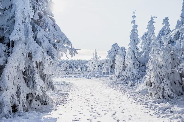 Piękny zimowy krajobraz ze śniegiem pokryte drzewami.