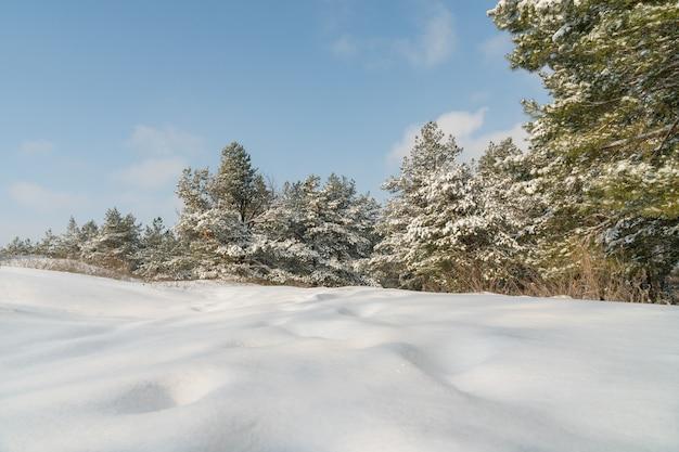 Piękny zimowy krajobraz ze śniegiem pokryte drzewami