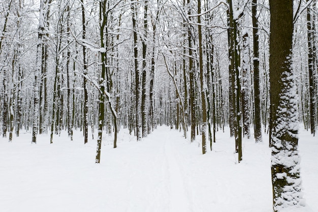 Piękny zimowy las i droga