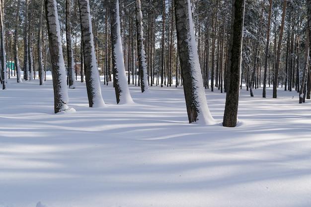 Piękny zimowy las lub park w śniegu