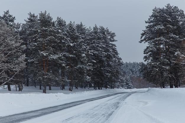 Piękny zimowy las z sosnami i drogą