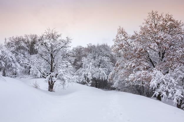 Piękny zimowy śnieżny krajobraz w parku