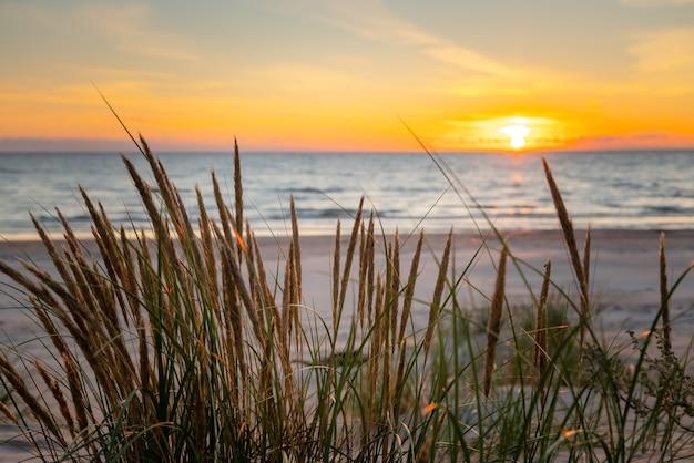 Piękny złoty zachód słońca przez trawę na plaży.