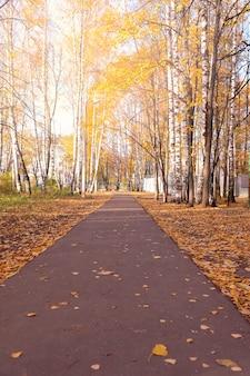 Piękny żółty jesień pas ruchu w lesie.