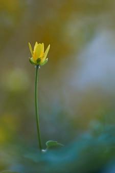Piękny żółty kwiat zbliżenie