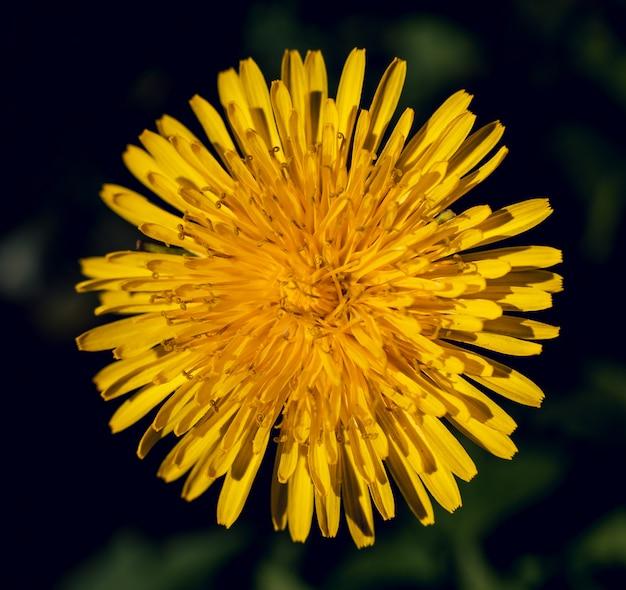 Piękny żółty kwiat