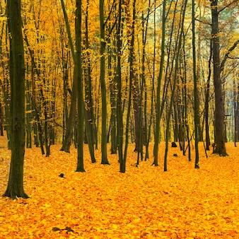 Piękny zwalony park w lesie z żółtymi i czerwonymi drzewami