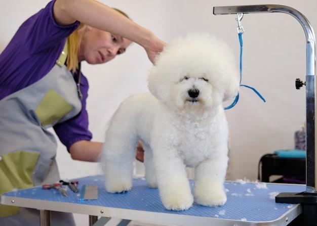 Pielęgnacja i pielęgnacja psa bishon na stole.