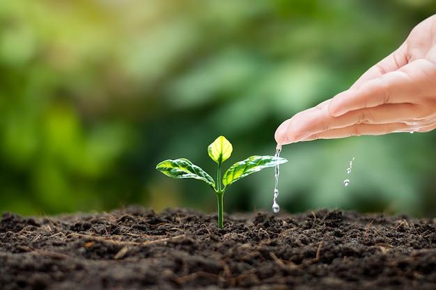 Pielęgnacja i podlewanie roślin dla dzieci rosnących na żyznej glebie z niewyraźnym zielonym tłem przyrody.