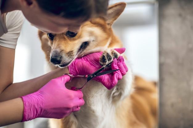 Pielęgnacja. kobieta obrządził konia pracującego w salonie pielęgnacji zwierząt domowych