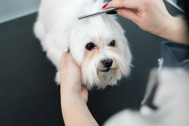 Pielęgnacja zwierząt, pielęgnacja, suszenie i stylizacja psów, czesanie wełny