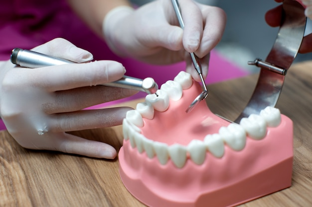 Pielęgniarka ćwiczy układ szczęki z zębami