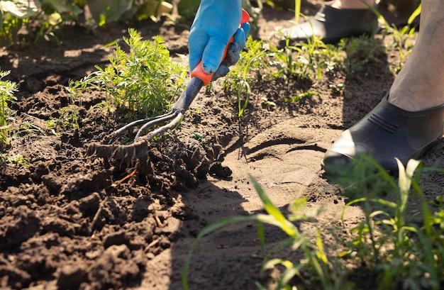 Pielenie za pomocą koncepcji narzędzia motyki nogi rolnika i ręka w rękawicy usuwające chwasty i pracującą glebę na farmie ...