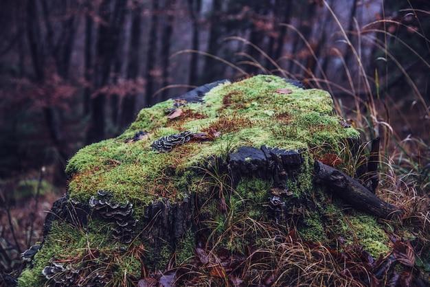 Pień drzewa z mchem w lesie