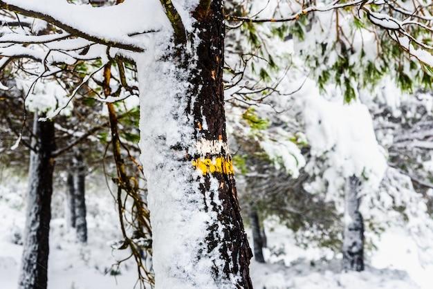 Pień drzewa ze znakami kierunkowymi zaśnieżonego szlaku turystycznego.