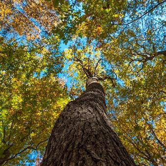 Pień i gałęzie starej korony drzewa, selektywne skupienie