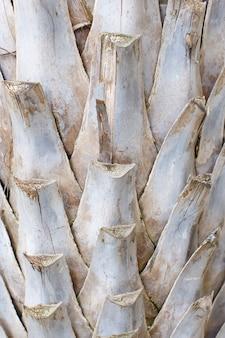 Pień palmy