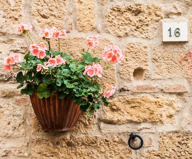 Pienza, region toskanii, włochy. stary mur z kwiatami