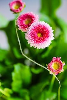 Pierwsze wiosenne kwiaty w doniczce