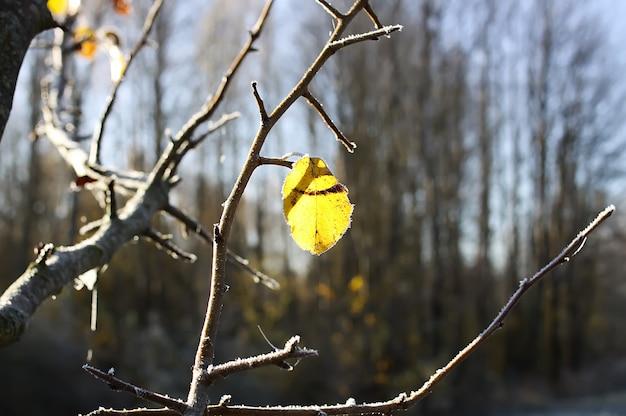 Pierwszy mróz w jesiennym parku. wczesny poranek w listopadzie. mokre gałęzie i liście w szronu