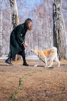 Pies akita inu na zielonej smyczy bawi się zabawką ze sznurka z kobietą w ciemnozielonym płaszczu