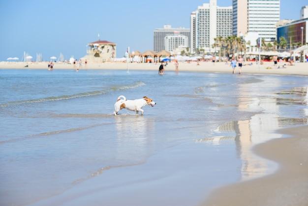 Pies biega z wody na piaszczystą plażę. szczęśliwy zwierzak na morzu.