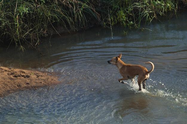 Pies biegnie przez wodę na suchym lądzie