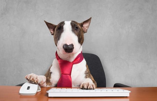 Pies biznesu za pomocą swojego komputera