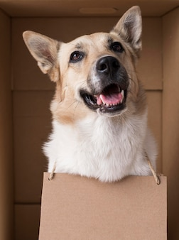 Pies buźkę sobie tekturowy transparent