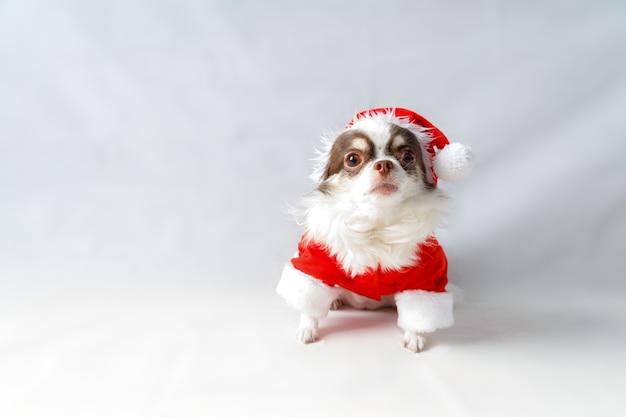 Pies chihuahua ubrany w czerwony kostium santa christmas