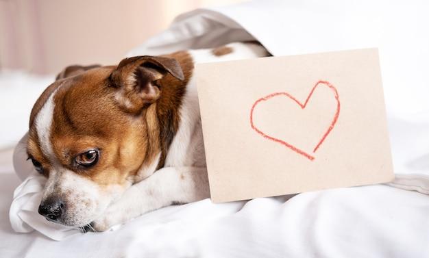 Pies chihuahua z rysunkiem serca na kopercie rzemiosła leżąc w łóżku.