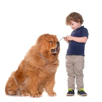 Pies chow chow i mały chłopiec