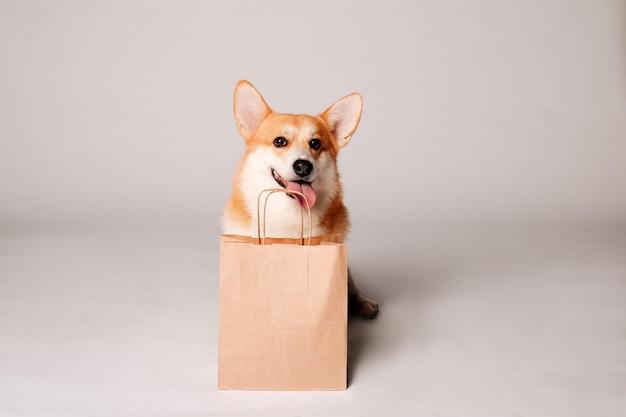 Pies corgi siedzi obok torby rzemieślniczej na lekkiej ścianie