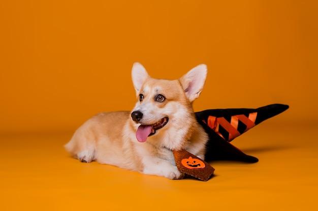Pies corgi w kostiumie na halloween