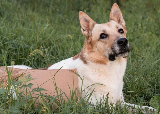 Pies do adopcji siedzi na trawie