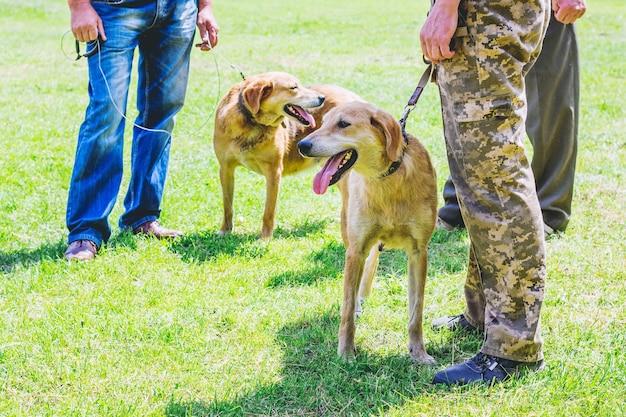 Pies gończy rosyjski na smyczy z gospodarzem podczas spaceru