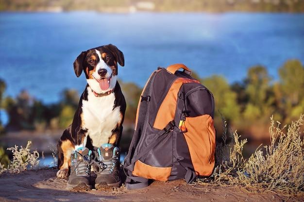 Pies górski w butach turystycznych, siedzący obok plecaka