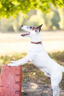Pies gra na zewnątrz w parku