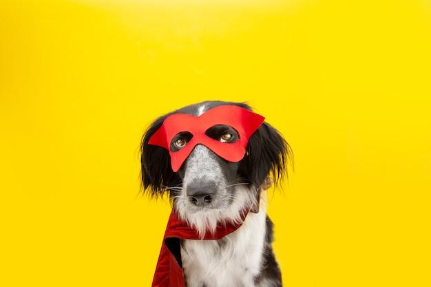 Pies halloween lub karnawał przebrany za super bohatera z poważnym wyrazem twarzy. na białym tle na żółtym backgorund