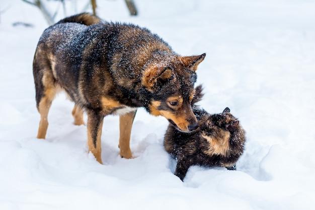 Pies i czerwony kot bawią się razem na świeżym powietrzu na śniegu zimą
