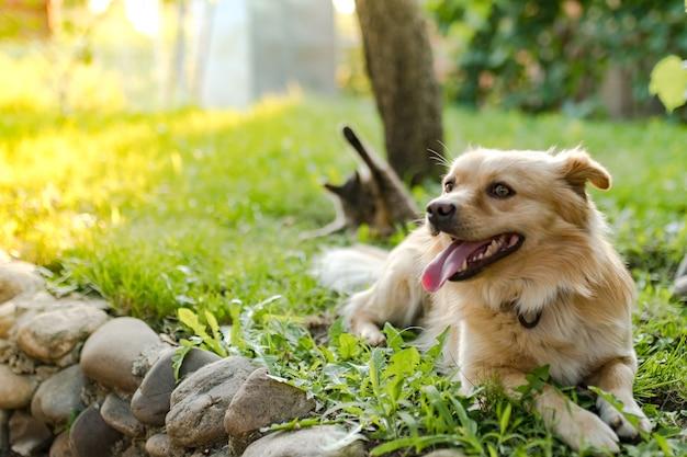 Pies i kot bawią się na podwórku na tle wieczornego światła słonecznego