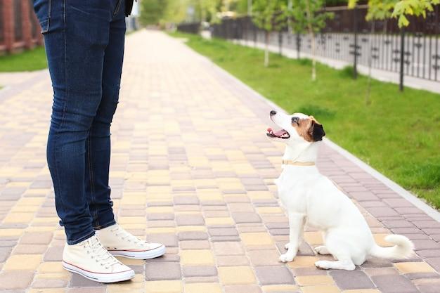 Pies i właściciel jack russell terrier w oczekiwaniu na spacer po parku, na ulicy, cierpliwy i posłuszny. edukacja i szkolenie psów. przyjaźń człowieka i psa. razem na letnie wakacje.