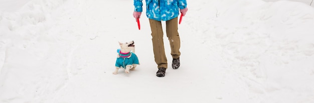 Pies jack russell terrier bawiący się w winter park