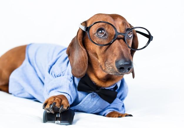 Pies jest w koszuli i okularach z myszką komputerową